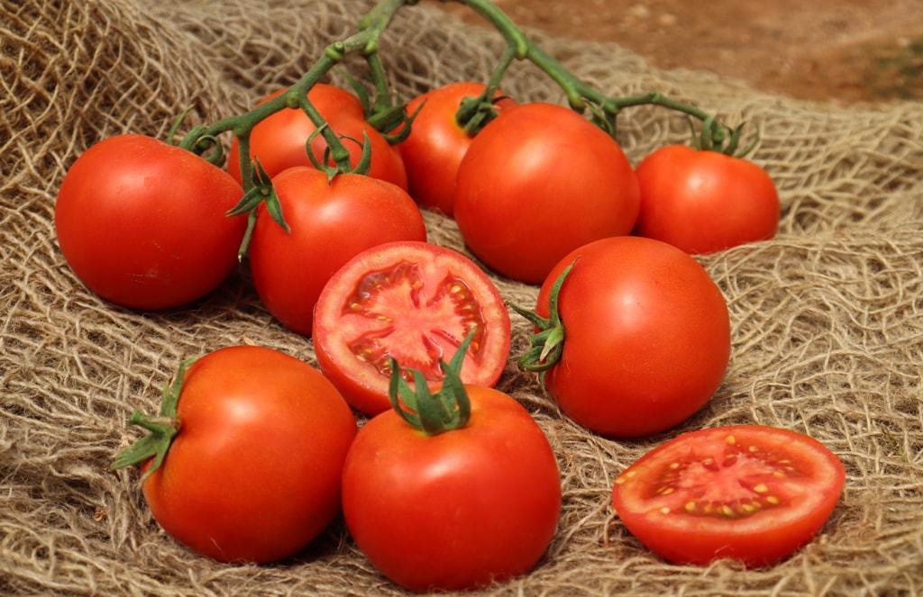 Indeterminate Tomato Bagan