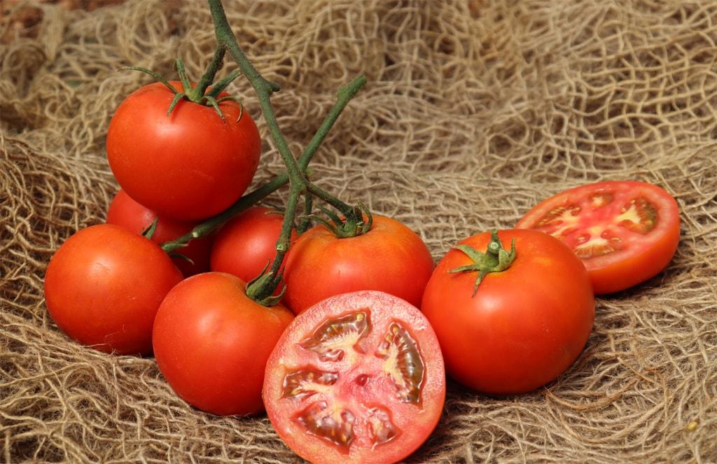 Indeterminate Tomato Pallas