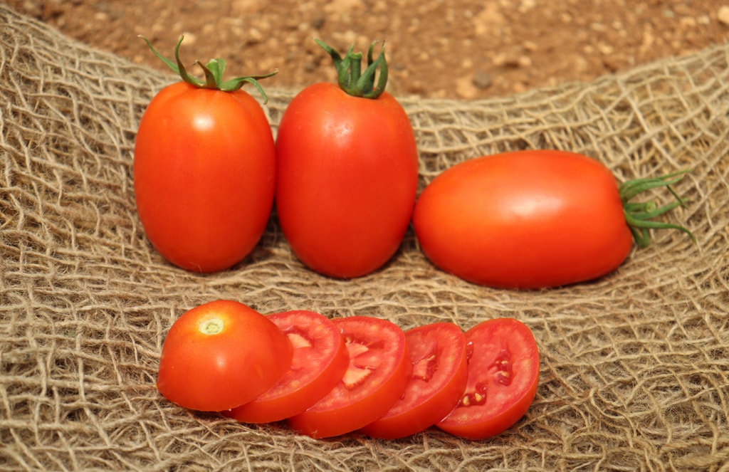 Indeterminate Tomato Valongo