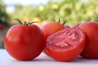 Hybrid Determinate TomatoBB STM 0544 Thrives in Tough & Extreme Conditions