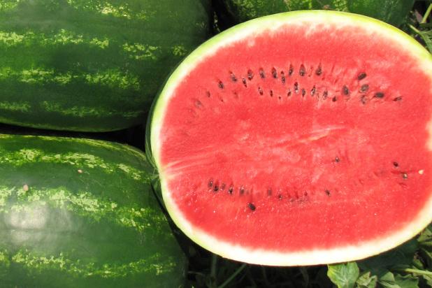 Hybrid Crimson Sweet Watermelon Avallon
